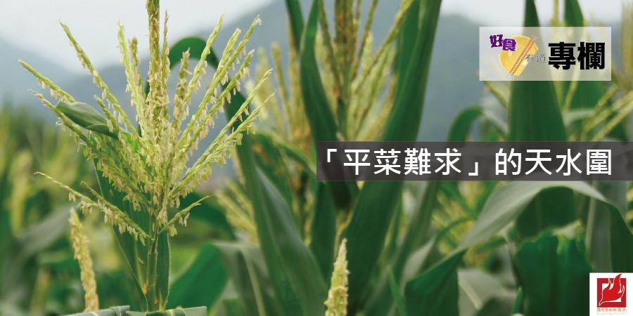 「平菜難求」的天水圍 -【好食有道】專欄
