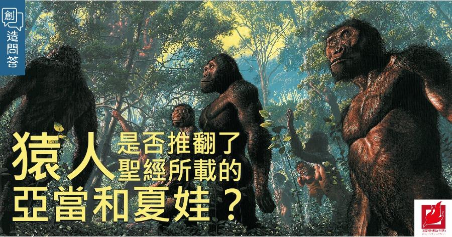 猿人是否推翻了聖經所載的亞當和夏娃?-【創造問答】專欄